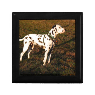Kevin the Dalmatian Gift Box