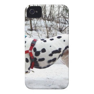 Kevin The Dalmatian iPhone 4 Case-Mate Case