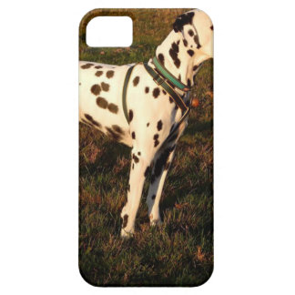 Kevin the Dalmatian iPhone 5 Covers