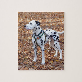 Kevin The Dalmatian Jigsaw Puzzle