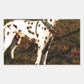 Kevin the Dalmatian Rectangular Sticker