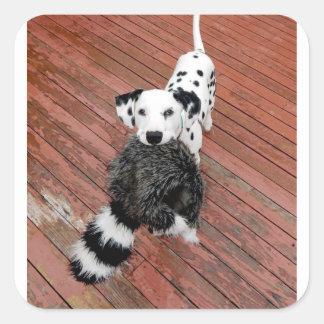 Kevin the Dalmatian Square Sticker