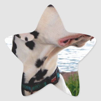 Kevin The Dalmatian Star Sticker