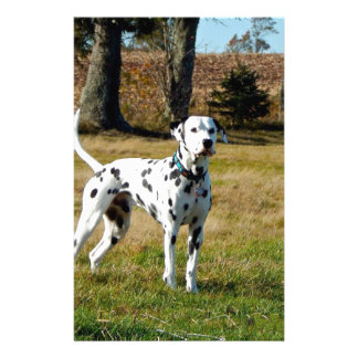 Kevin the Dalmatian Stationery