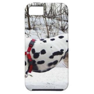 Kevin The Dalmatian Tough iPhone 5 Case