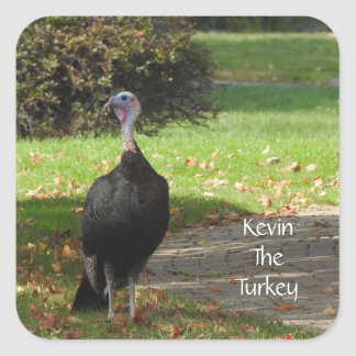 Kevin The Turkey - Old Wethersfield , CT Square Sticker