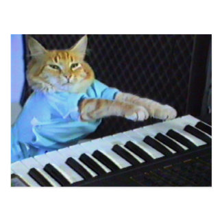 Keyboard Cat Postcard! Postcard