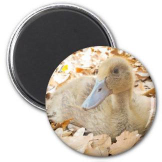 Khaki Campbell Duckling Refrigerator Magnet