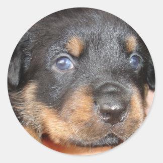 Kia Ora I ll be Your Dog Stickers