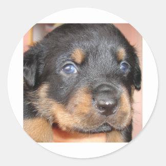 Kia Ora ...I'll be Your Dog Stickers