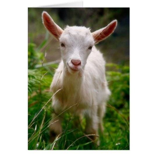 Kid Goat Card