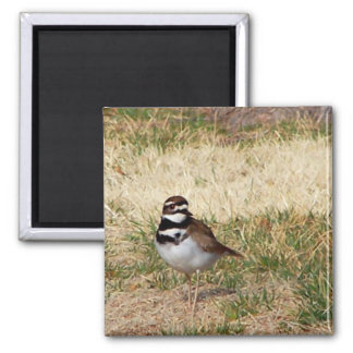 Killdeer bird magnet