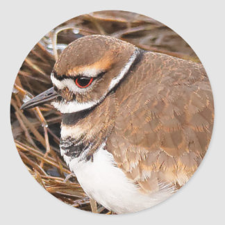 Killdeer in the Freezing Mudflats Classic Round Sticker