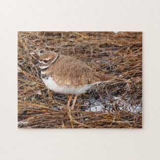 Killdeer in the Freezing Mudflats Jigsaw Puzzle