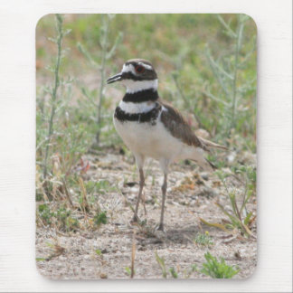 Killdeer Mousepad
