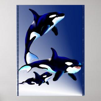 Killer Whale Family Poster