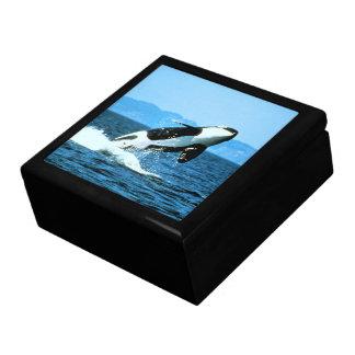Killer Whale Gift Box
