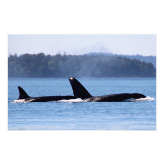 Killer Whale Mother and Son Customized Stationery