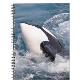 Killer whale notebooks