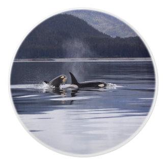 Killer Whales Ceramic Knob