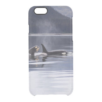 Killer Whales Clear iPhone 6/6S Case