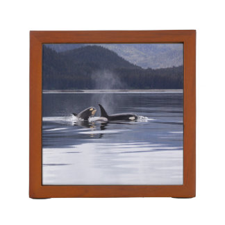 Killer Whales Desk Organiser