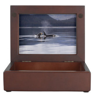 Killer Whales Keepsake Box
