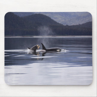 Killer Whales Mouse Pad