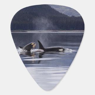Killer Whales Plectrum