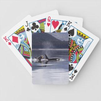 Killer Whales Poker Deck