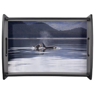Killer Whales Serving Tray