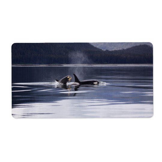 Killer Whales Shipping Label