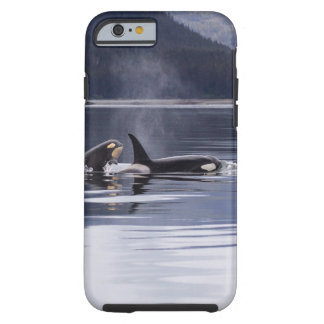 Killer Whales Tough iPhone 6 Case