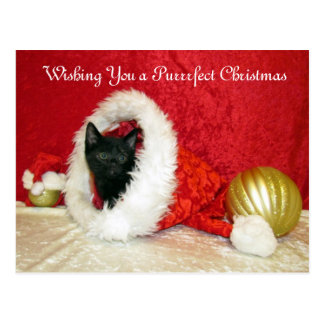Kimba's Christmas Postcard ( Kitten Cat Rescue )