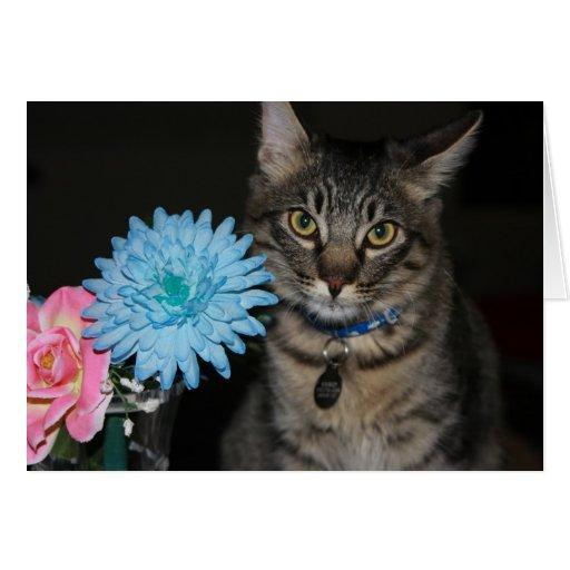 Kimber Cat Poses Get Well Card