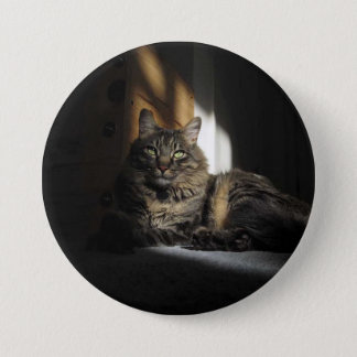 Kimber Cat Slivers of Sunlight Button