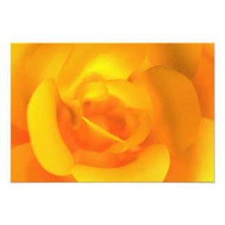 Kindled Rose Photo Print