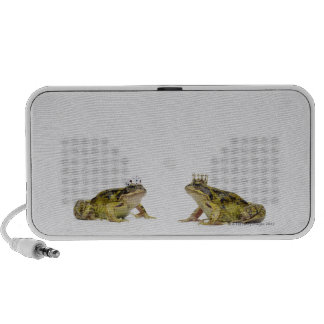 King and Queen frog looking at each other Speakers