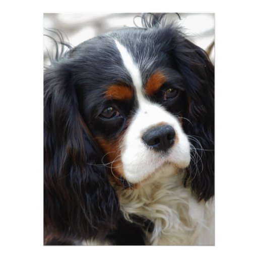 King Charles Cavalier Portrait Personalized Invites