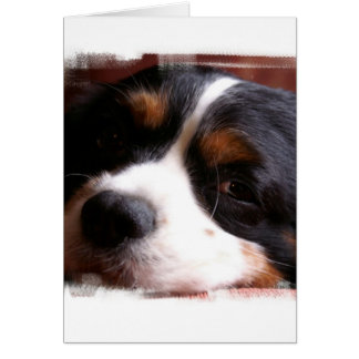 King Charles Cavalier Spaniel Greeting Card