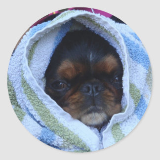 King Charles Spaniel Dog  Sticker All Wrapped Up