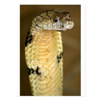 king cobra postcard