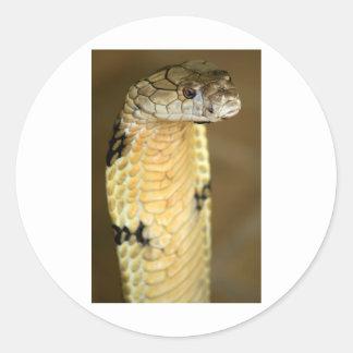 king cobra round sticker