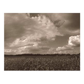 King Cotton Rural South Postcard