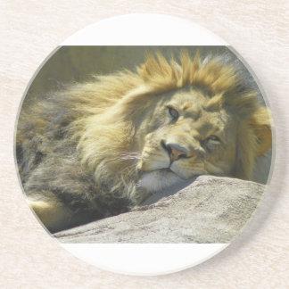 king of beast posing for camera sandstone coaster