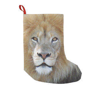 King of the jungle lion small christmas stocking