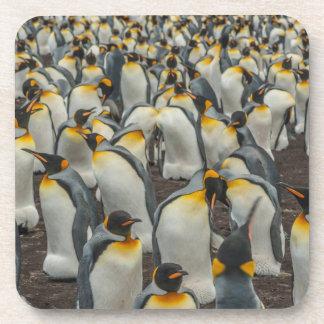 King penguin colony, Falklands Coaster