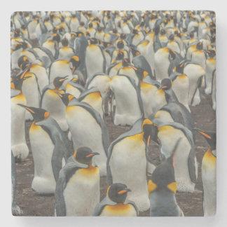 King penguin colony, Falklands Stone Coaster