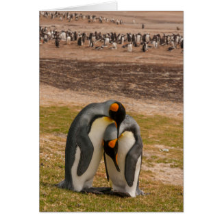 King penguins caressing, Falkland Card