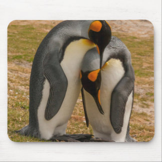 King penguins caressing, Falkland Mouse Pad